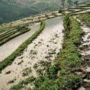 Uitzicht op rijstvelden